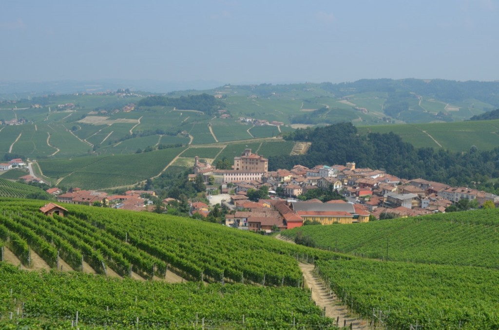 Commune of Barolo Vineyards