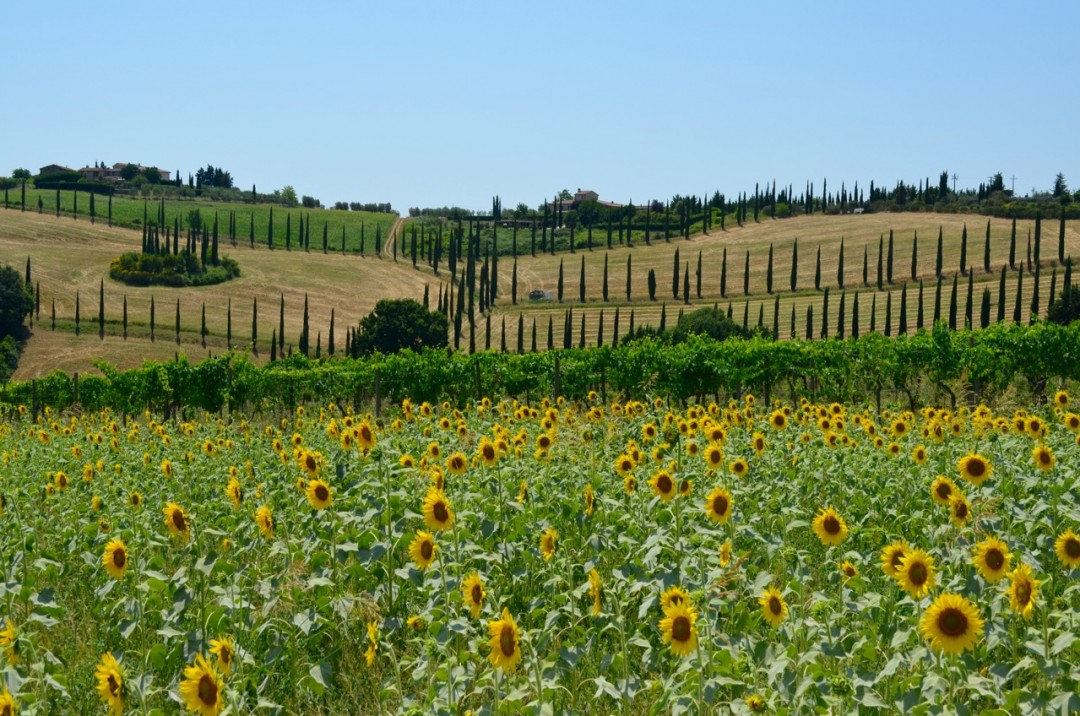 Tall Travel - Tuscany