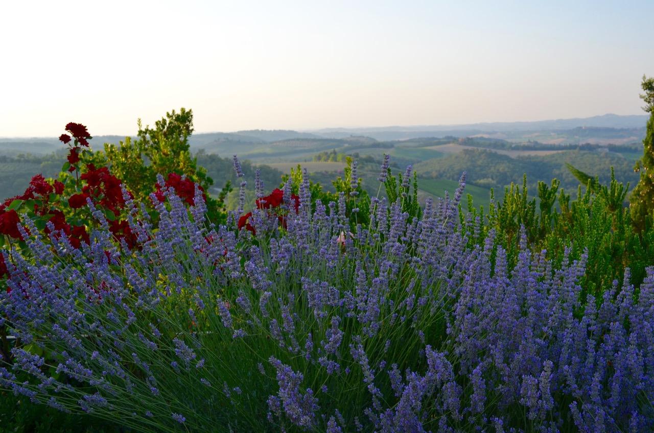 Tuscany Lavendar