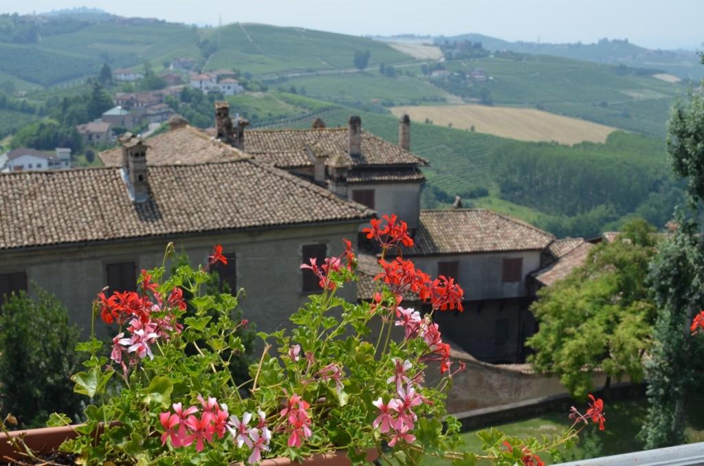 Piedmont Vineyard View