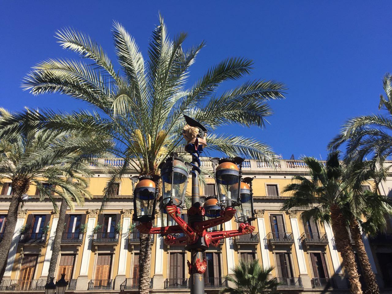 Barcelona Palm Trees
