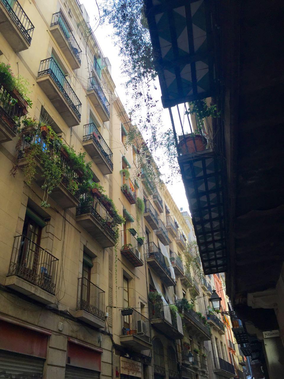 Barcelona balcony plants
