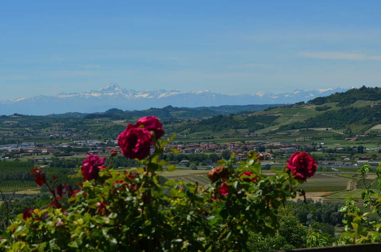 Views of the Alps from Barbaresco