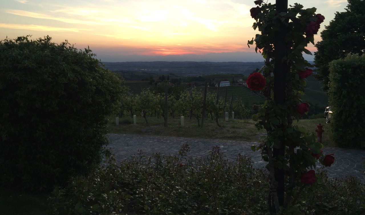 Sunset over Piedmont vineyards