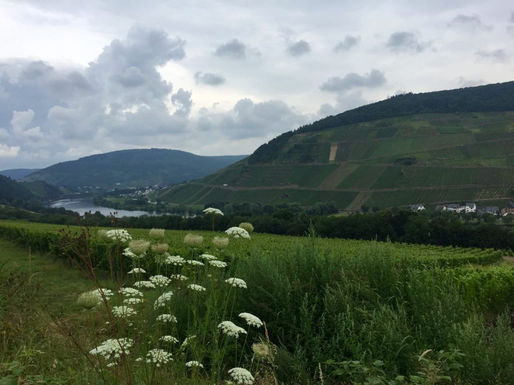 Mosel River views