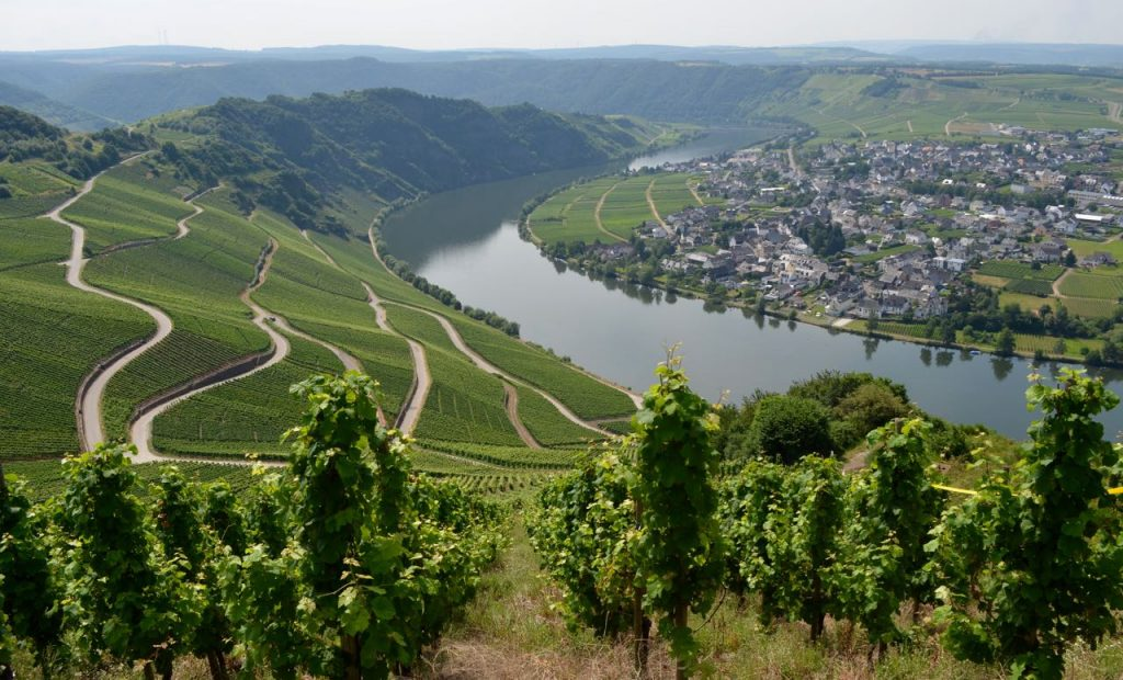 View of vineyards and Mosel River in Piesport
