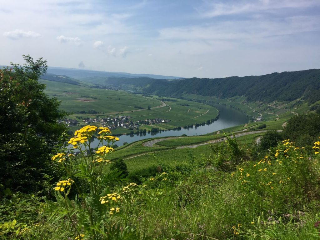 Mosel vineyard views near Piesport