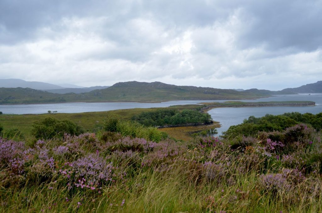4 Days in the Scottish Highlands - Coastal heather