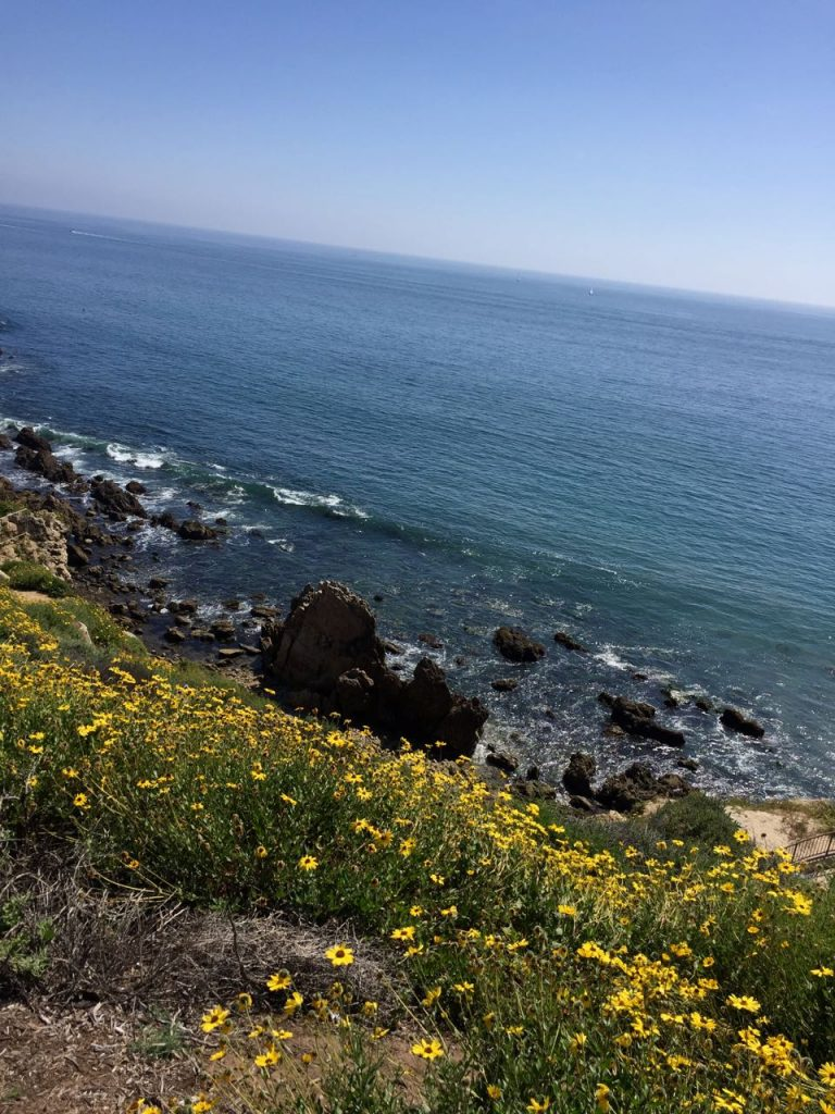 Corona Del Mar yellow flowers