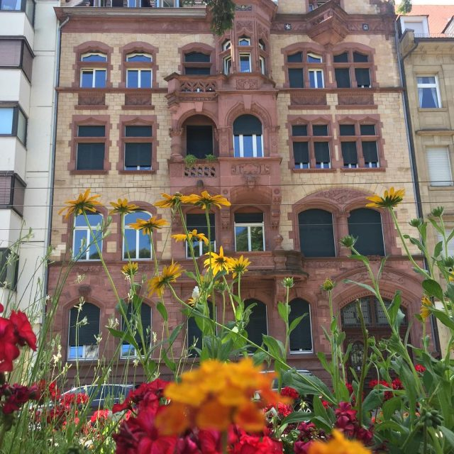 So many pretty blooms all over Heidelberg The last timehellip
